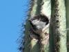 house-sparrow2