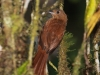 226-white-lined-tanager-female