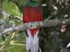 resplendent-quetzal