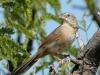 botteris-sparrow
