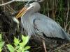 heron-dinner1