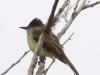 027-dusky-capped-flycatcher