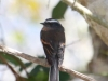 059-rufous-breasted-chat-tyrant