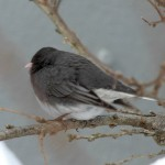 Eastern Birds: Quiz #4