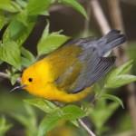 Eastern Birds: Quiz #5