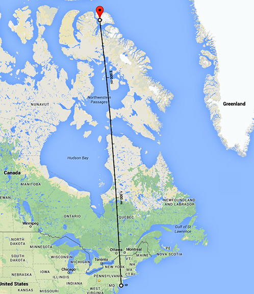 It's 2,333 miles in a straight line from Bylot Island to Forsythe NWR.