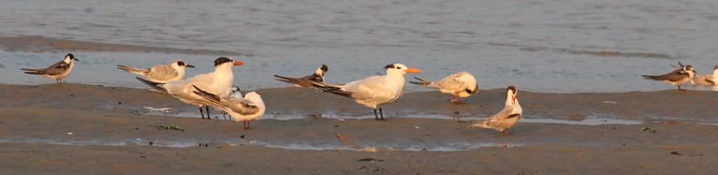 tern-group