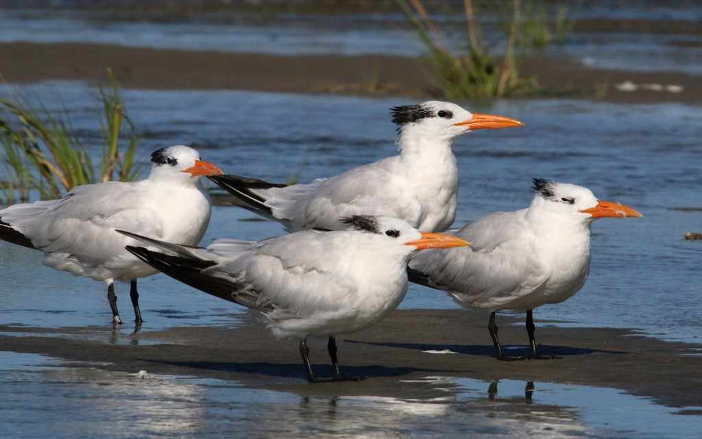 four-terns