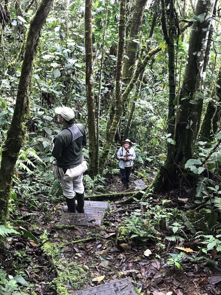 Wildsumaco trail
